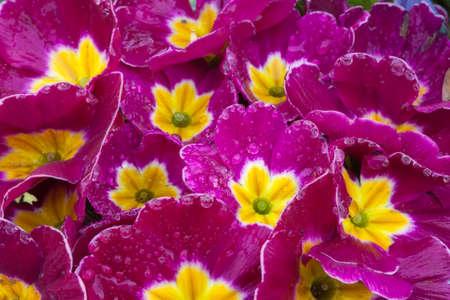 flor: Pink flowers collage