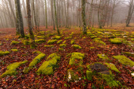 centenary: Monte Santiago forest in winter Stock Photo