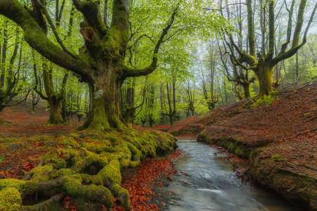 moos: Green forest at Gorbea Natural Park