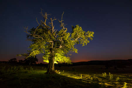 iluminated: Lonely tree iluminated at night