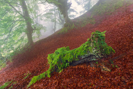 gloom: Green on red, misty forest