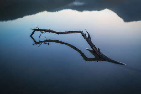 Branch reflection in a lake with calm water