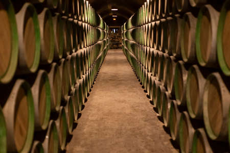 Barrels in a row in a winery in Elciego, Alava