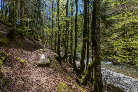 Irati forest in a sunny spring day in Navarra Stock Photo