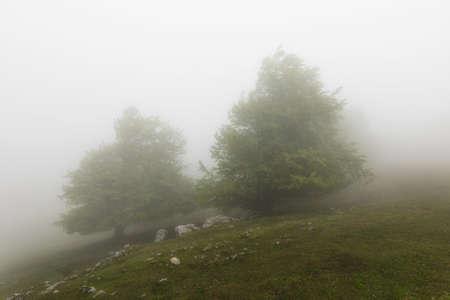 Misty forest in Urbasa mountains in Navarra