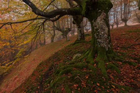 Belaustegi forest i gorbea Natural park, Orozko, Bizkaia Stockfoto