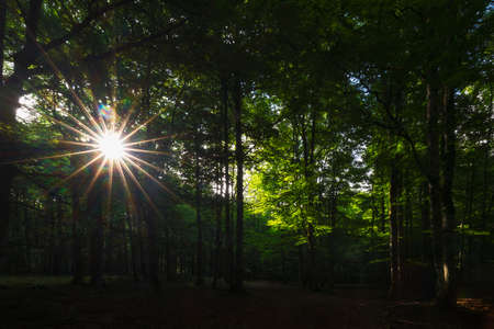 Sun rays between the trees in Urbasa forest, Navarra