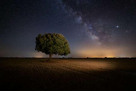 Milky way over an oak tree in Palencia, Spain