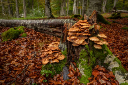 Mushrooms in a fallen tree in Entzia forest