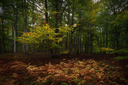 Autumn is comming in Entzia forest in Alava