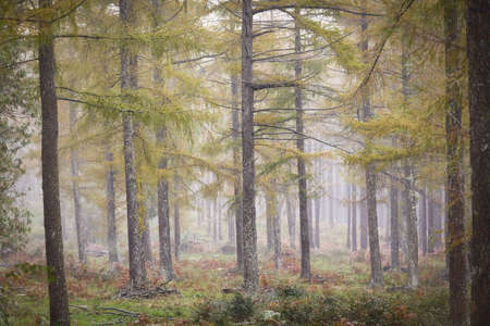 Otzarreta forest in Gorbea Natural Park. Bizkaia, Basque Country