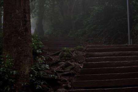 scenary: Nature scenary