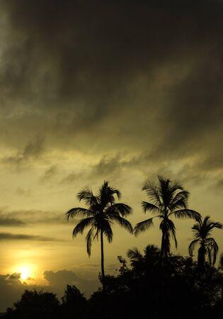 sillouette: Sunrise Stock Photo