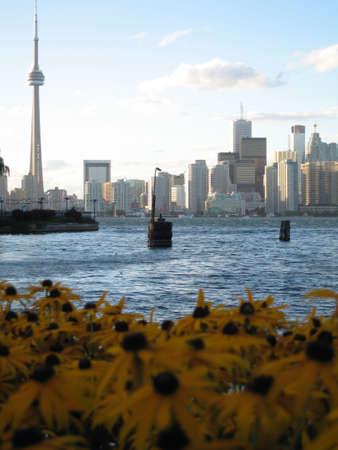 CN Tower & Toronto Skyline with Sunflowers foreground  photo