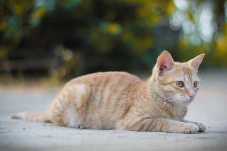 Cat are wonderful pet they are very cute and sweet.