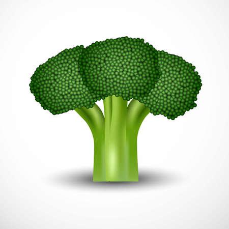 fresh green broccoli isolated white background. vector illustration