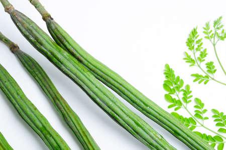 oleifera: La planta de baquetas, tambi?n conocido como Moringa oleifera Foto de archivo