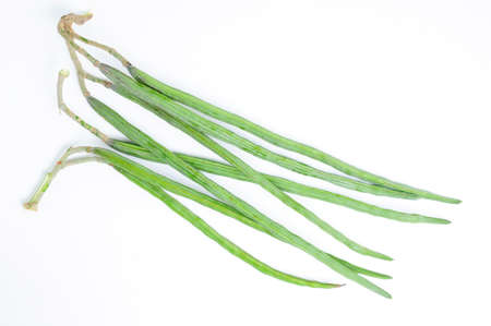 sonjna: The Drumstick Plant also known as Moringa oleifera