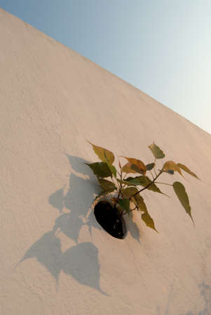 Flowers growing on a wall photo
