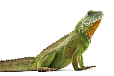 Green dragon Stock Photo