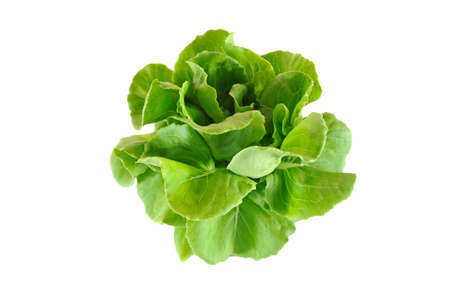 Fresh green salad isolated on white background