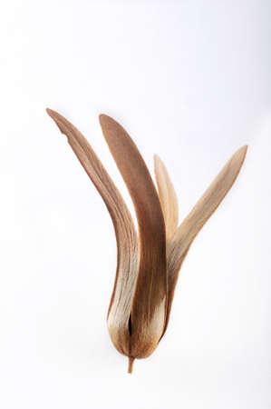 La graine ail�e, dans le vent Banque d'images