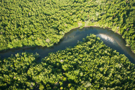 Aerial view of mangrove forest and river Stock Photo