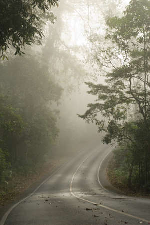 spooky scene from a tropical forest Thailand