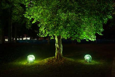 Les arbres dans le parc la nuit