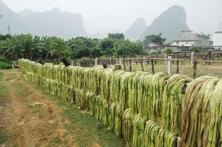 La fibre de sisal, les mati�res premi�res de la Chine