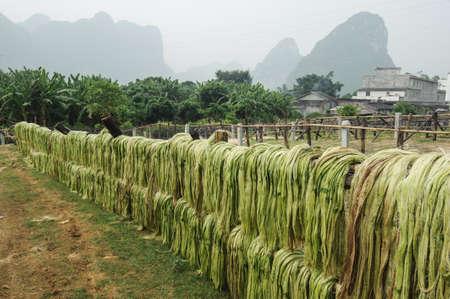 サイザル麻繊維、中国からの原料 写真素材