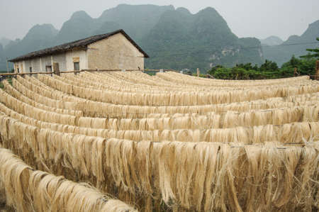 fort dauphin: Sisal fiber, raw material from China