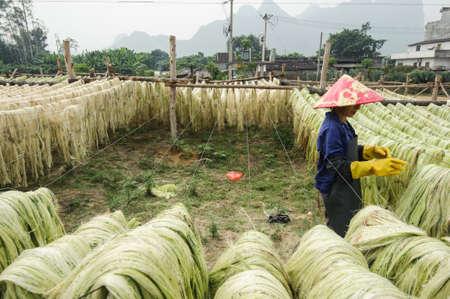 Sisal fiber, raw material from China Stock Photo - 21714892