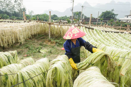 Sisal fiber, raw material from China