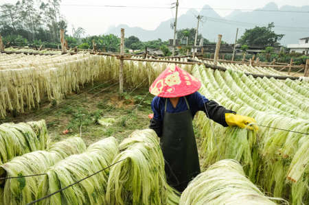 sisal: Sisal fiber, raw material from China