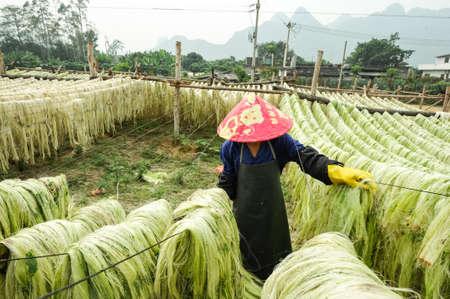 Sisal fiber, raw material from China Stock Photo - 21714894