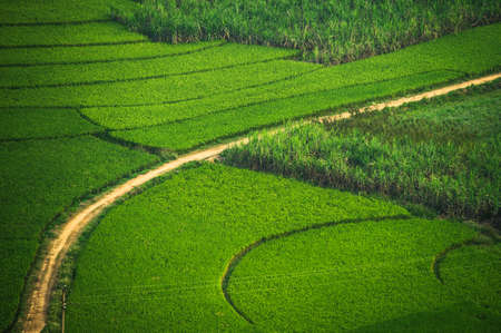 Green Terraced Rice with sugar cane Field in Guangxi, China Stock Photo - 21726338
