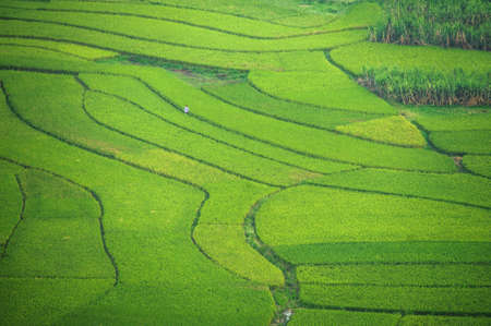 Ricefield in China Stock Photo - 21726339
