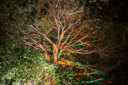 the tree with spread branch and green leaves in the night park photo
