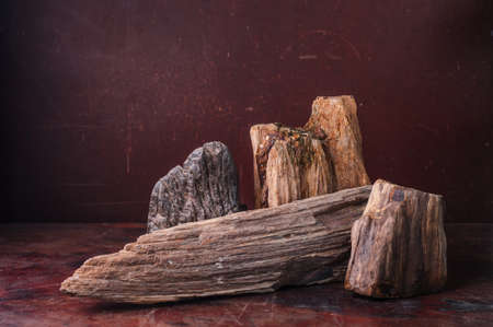 petrified fossil: Petrified Wood  put on table in dark background