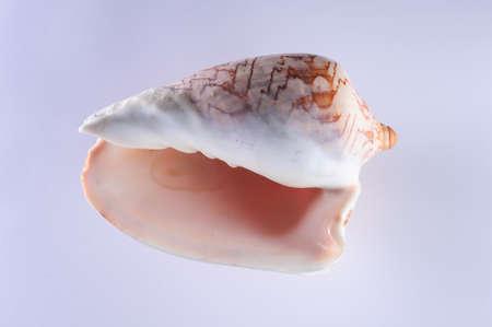 clam gardens: Sea shells, pacific ocean