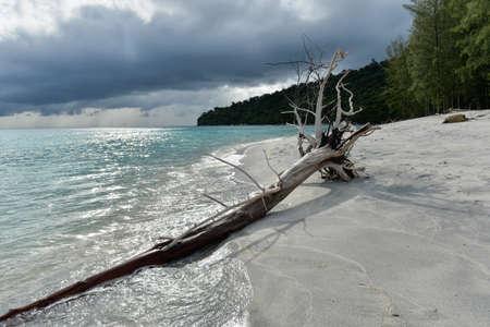 ashore: Dead tress at the shore of tropical beach, Thailand Stock Photo