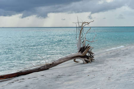 Dead tress at the shore of tropical beach, Thailand photo