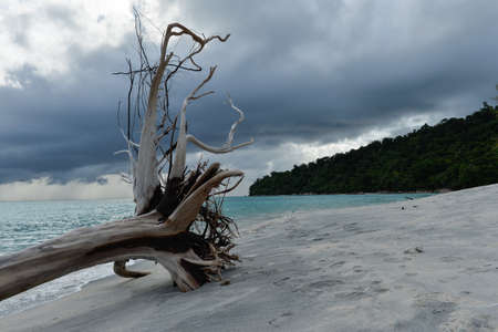Dead tress at the shore of tropical beach, Thailand Stock Photo