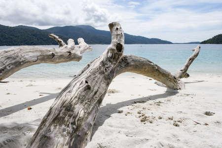 Interesting dead tree on tropical beach, Thailand