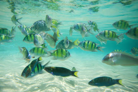 Colorful of fishes with ripples of sunlight reflected on the ocean floor photo