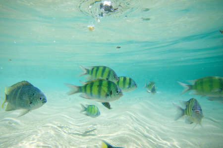 major ocean: Colorful of fishes with ripples of sunlight reflected on the ocean floor