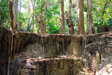 cascade de calcaire dans la for�t tropicale, � l'ouest de la Tha�lande