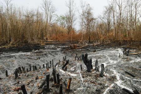 devastation: Remnants of forest or bush fire in Thailand