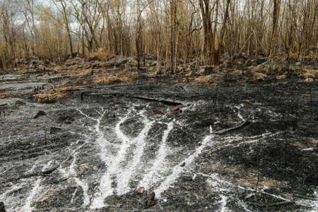 bush fire: Remnants of forest or bush fire in Thailand